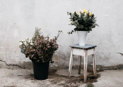 Floristería 1 beso y 1 flor